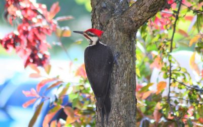 Lessons From a Woodpecker