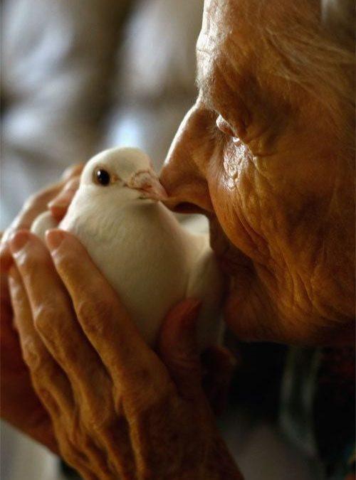Wisdom and Innocence